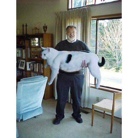 Big-cat_1466948i
