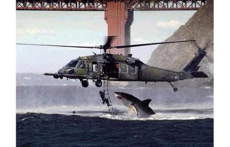 helicopter-shark