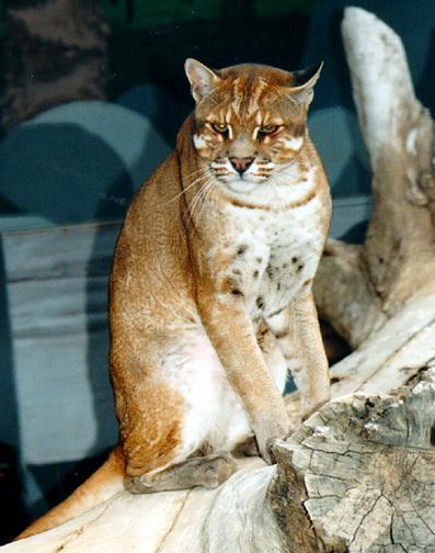 Daftar Nama Binatang Langka Indonesia