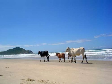 South America - Praia do Rosa, Brazil