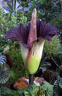 Download 94 Koleksi Gambar Flora Dan Fauna Langka Di Indonesia Paling Bagus