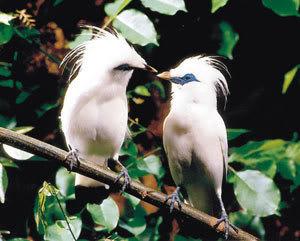 Flora dan Fauna Langka Dari Indonesia