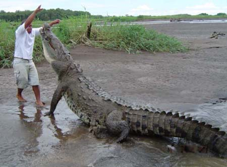 http://samudro.files.wordpress.com/2010/03/crocodile.jpg