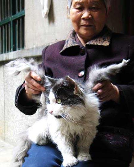 Kucing Yang Mempunyai Sayap